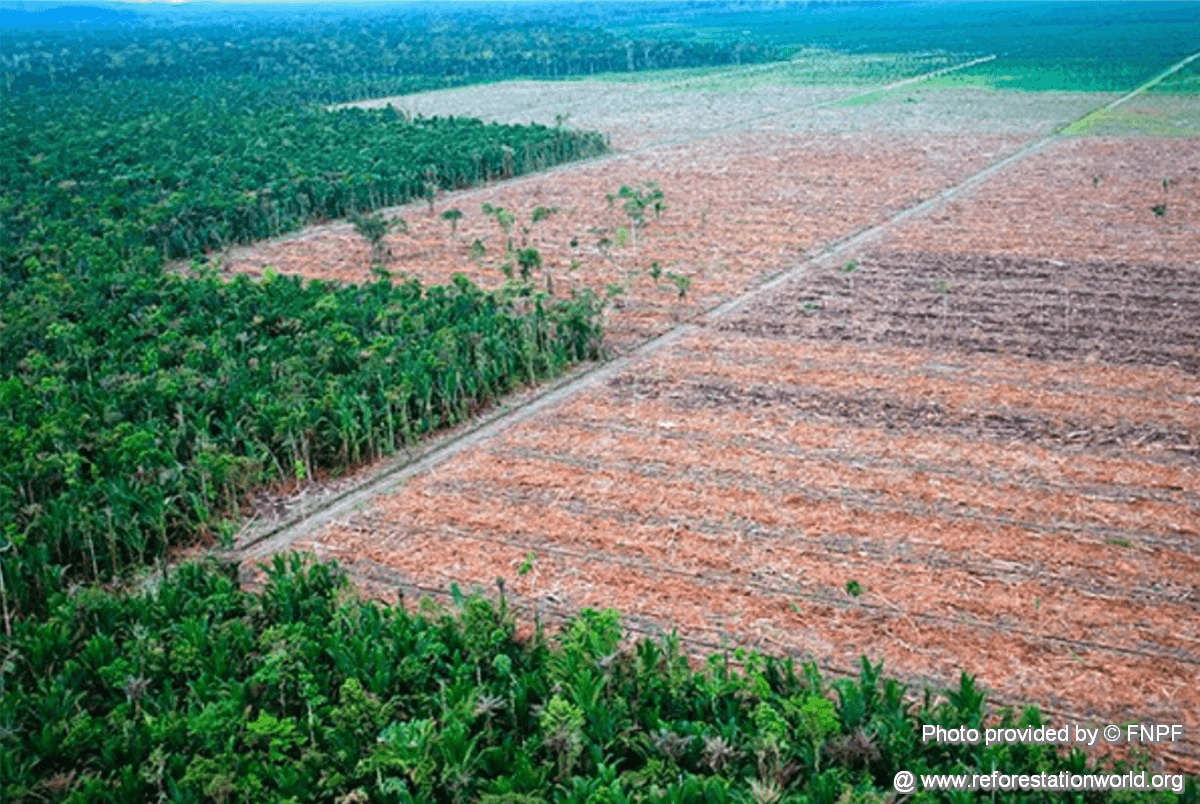 Native Forest and Plantation